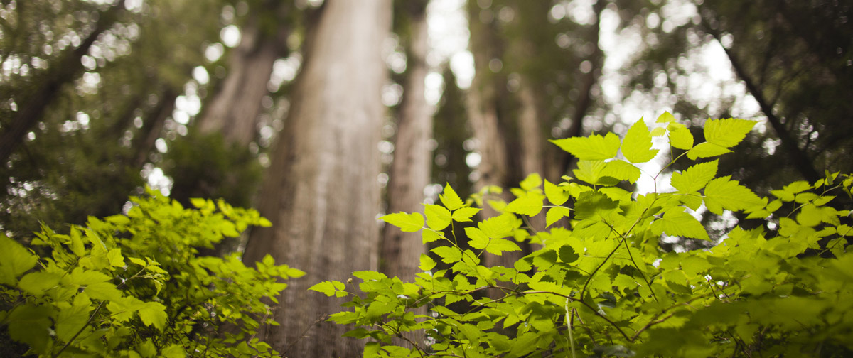 лісове господарство